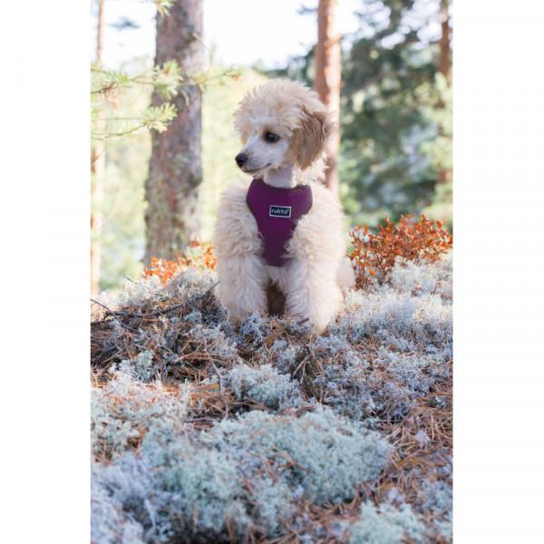 Rukka Pets Mini Comfort tuig, paars