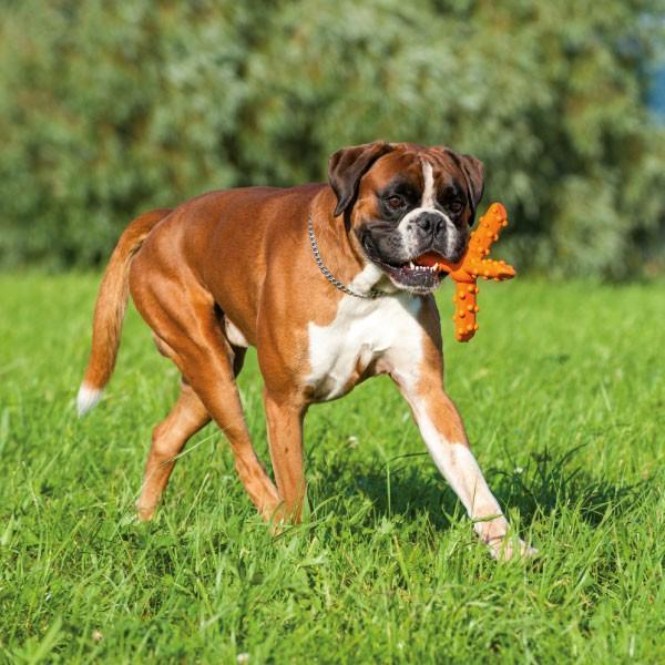 Major Dog Whirl, groot