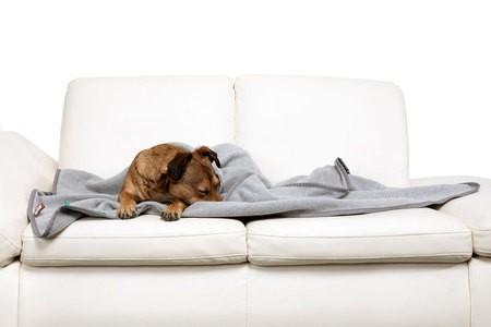 Doctor Bark zachte fleece deken lichtgrijs