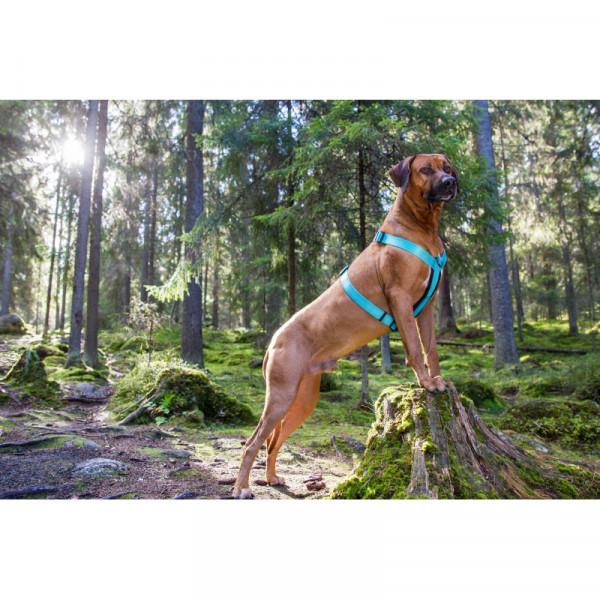 Rukka Pets Form Tuig, Turquoise