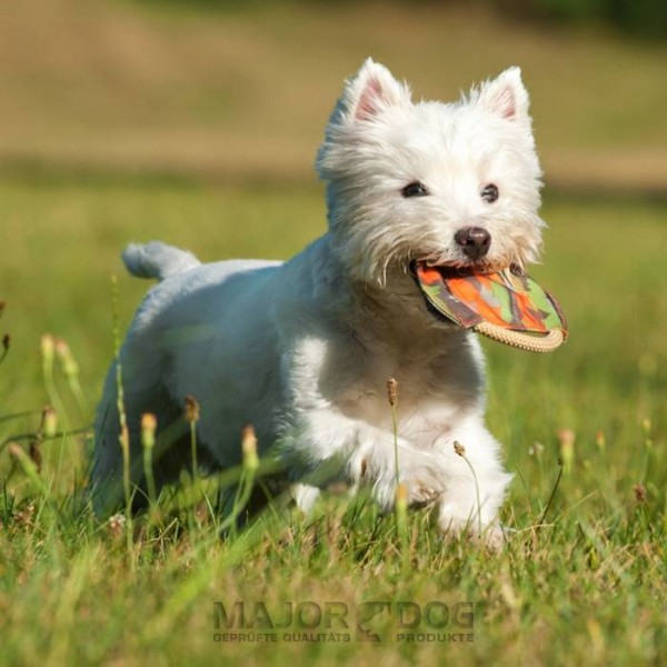 Major Dog Frisbee mini