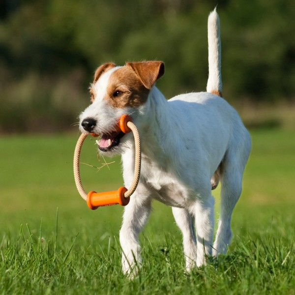 Major Dog Dummy Scuffle, klein